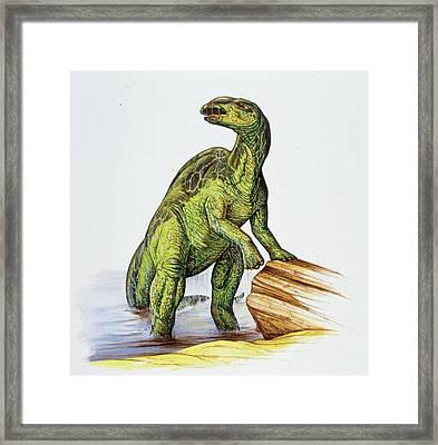 Edmontosaurus Dinosaur Framed Print