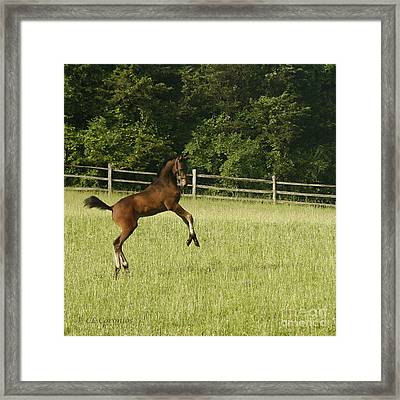 Framed Print featuring the photograph Eek   Whazzat? by Carol Lynn Coronios