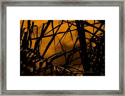 Eerie Attraction Framed Print