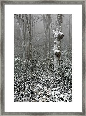 Eerie Forest Winter Framed Print by John Haldane