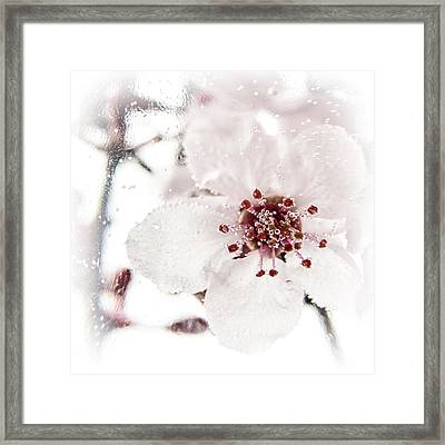 Effervescent Framed Print by Caitlyn  Grasso