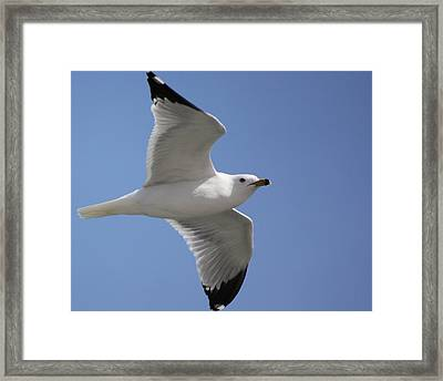Framed Print featuring the photograph Effortless Flight by Bill Woodstock