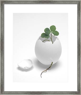 Framed Print featuring the photograph Egg And Clover by Krasimir Tolev