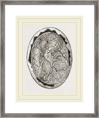 Egg On Eighteenth Day Framed Print by Litz Collection