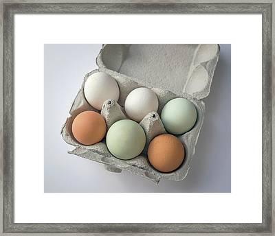 Egg Pigmentation Framed Print by Robert Brook
