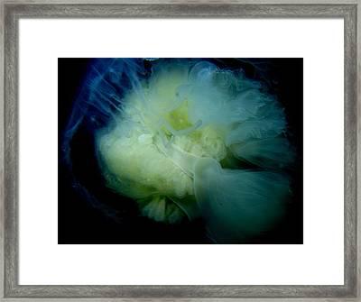 Egg Yolk Jelly Framed Print by April Muilenburg