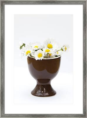 Eggcup Daisies Framed Print