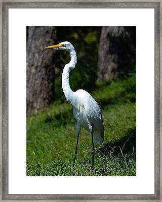 Egret - Full Length Framed Print