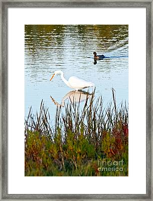 Framed Print featuring the photograph Egret And Coot In Autumn by Kate Brown