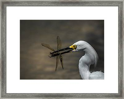 Egret And Dragonfly Framed Print by Robert Frederick