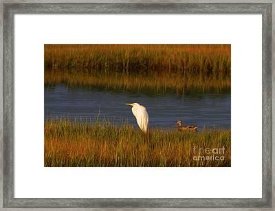 Egret And Duck Framed Print
