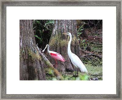 Egret And Spoonbill Framed Print by Theresa Willingham