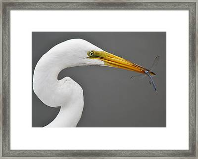 Egret And The Dragonfly Framed Print by Paulette Thomas