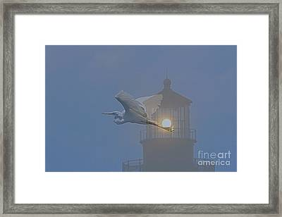 Egret At Hatteras Framed Print