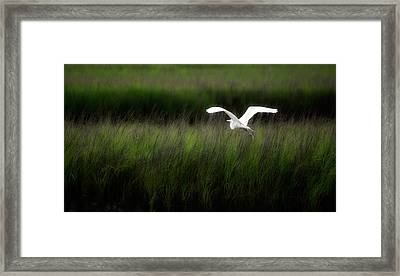 Framed Print featuring the photograph Egret At Pawleys Island by Frank Bright
