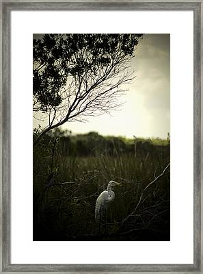 Egret At Sunset Framed Print