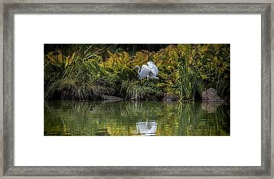 Framed Print featuring the photograph Egret At The Lake by Chris Lord