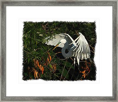 Egret Beauty Framed Print by Wynn Davis-Shanks