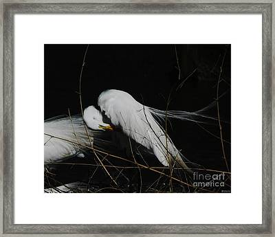 Egret Bird City At Avery Island Louisiana Framed Print