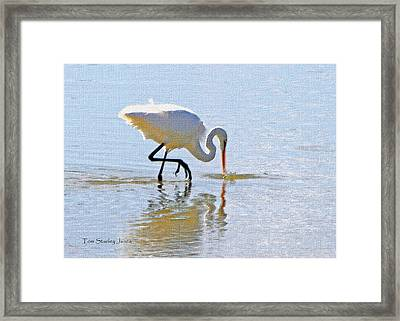 Egret Catches A Fish Framed Print by Tom Janca