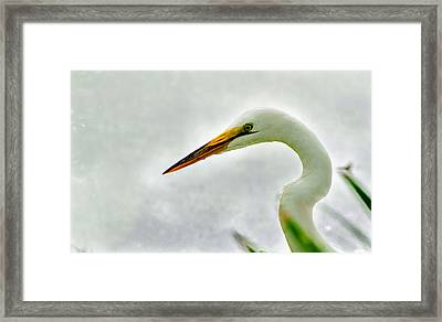 Egret Close-up Framed Print