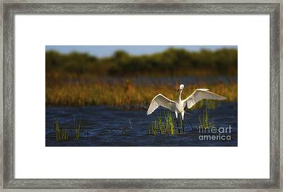Egret Dancer Framed Print