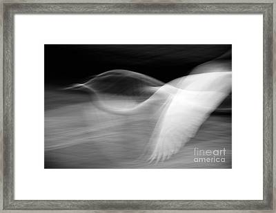 Framed Print featuring the photograph Egret Fantasy In Black And White by Anne Rodkin