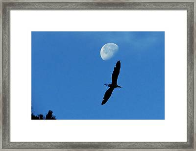 Framed Print featuring the photograph Egret Flight by Charlotte Schafer