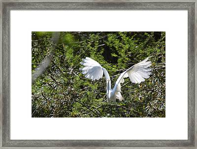 Framed Print featuring the photograph Taking Off by Judith Morris
