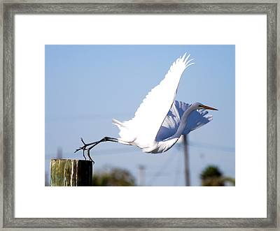 Framed Print featuring the photograph Egret In Flight by Linda Cox