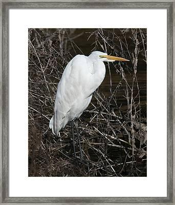 Egret In Reeds 16x20 Framed Print by David Lynch