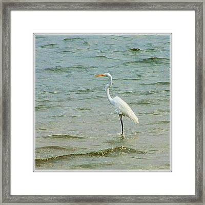 Egret In The Shallows Framed Print