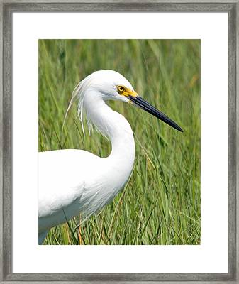 Framed Print featuring the photograph Egret In The Sound by Greg Graham