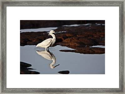 Framed Print featuring the photograph Egret In Tide Pool  Mg_9631 by David Orias