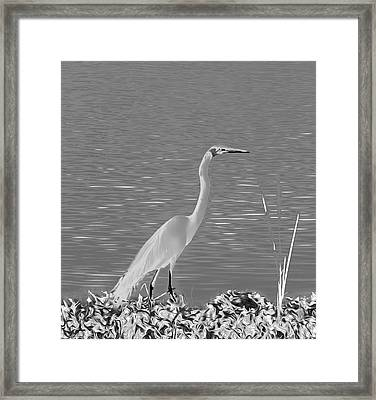 Framed Print featuring the photograph Egret In White Satin by Frank Bright