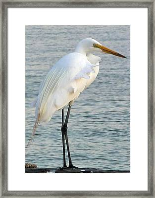 Framed Print featuring the photograph Egret by John Collins