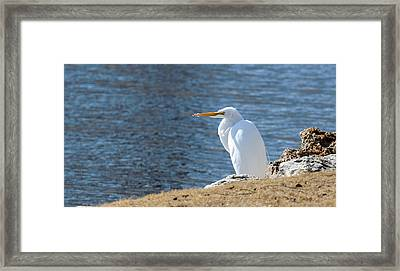 Egret Framed Print by John Johnson