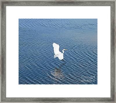 Egret Landing 2 Framed Print