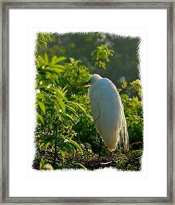Egret Morning Framed Print by Wynn Davis-Shanks