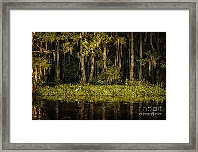 Egret On Caddo Lake Framed Print by Tamyra Ayles