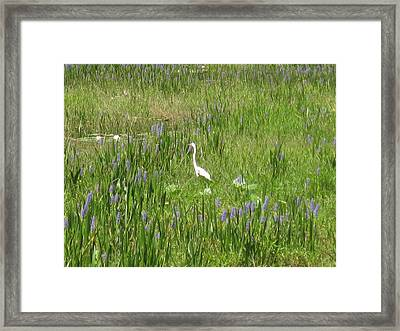 Egret On The Lake Framed Print