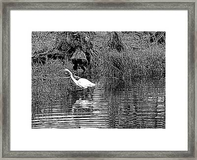 Framed Print featuring the photograph Egret On The Move by Suzy Piatt