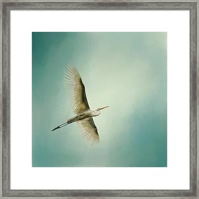 Egret Overhead Framed Print
