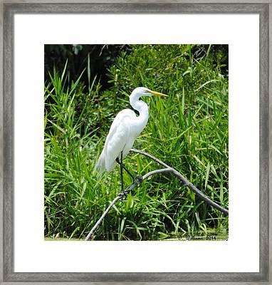 Egret Perching On Branch Framed Print