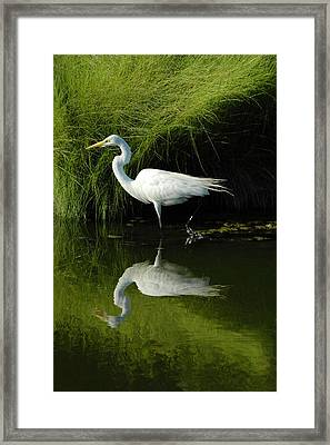 Egret Reflections Framed Print