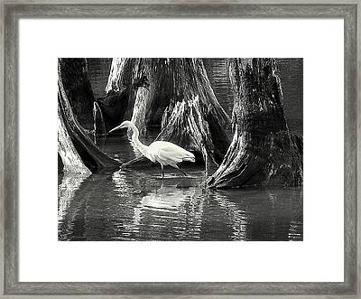 Framed Print featuring the photograph Egret Solitude by Suzy Piatt
