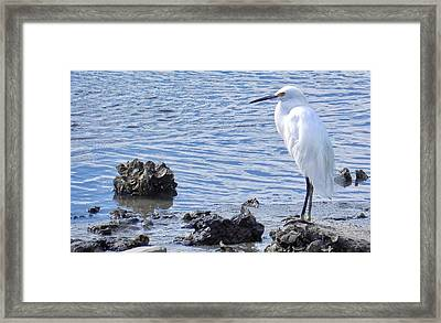 Egret Standing Perfectly Still Framed Print