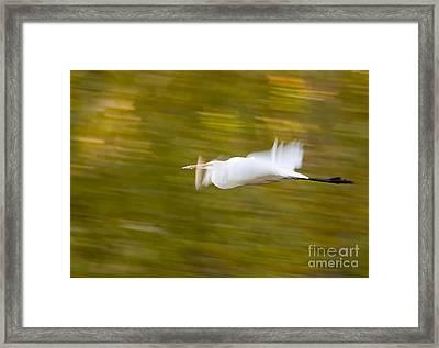 Egret Framed Print by Steven Ralser