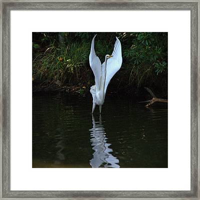 Framed Print featuring the photograph Egret Take Off by Charlotte Schafer