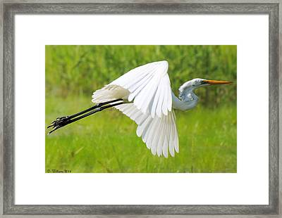Egret Takes Flight Framed Print